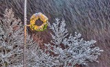 Light Pole Holiday Wreath In Falling Snow P1350638-40