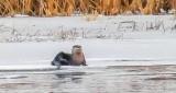 Otter On Ice P1030781
