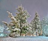 Snowy Nightscape P1350653-5