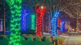 Holiday Lights P1030948-54