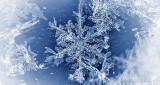 Snowflake P1040872