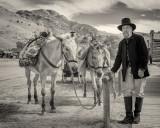 The Mule Skinner
