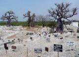 Fadiouth, cémetière des chrétiens et musulmans, cemetary of Christians and Muslims, Sénégal
