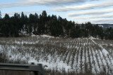 Hood River Orchards