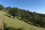 The Orestimba Creek Trail