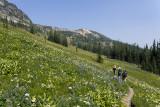 Wildflowery Buckskin Ridge Trail