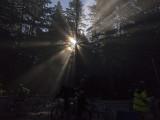 Sunrays through the Redwoods