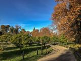 Perpetual Autumn