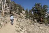Liitle hike through the Ancient Bristlecone Pine Forest