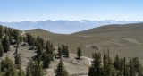 Ancient Bristlecone Pine Forest View