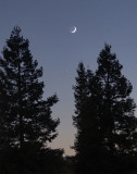 Young Moon and Jupiter Setting