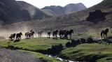 Le retour du troupeau