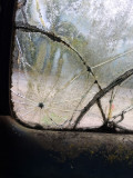 windshield 3