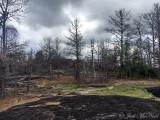 drought-enduced Loblolly Pine death on granite outcrop: Heard Co., GA