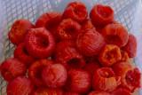 Red Field tomatoes.jpg