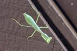 Overhead mantis.jpg