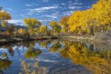 Autumn along the CO river.jpg