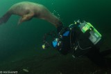 The Problem With Shooting Sea Lions (3)
