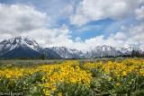 Teton Mountains