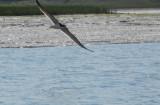 Upper Newport Bay Paddling