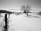 paysages_bnw