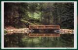 Dorsey Lake
