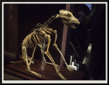 The Mary Rose Dog