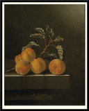 Still Life with Five Apricots, 1704