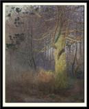 Tree in the Sun,1900