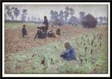 Gathering Corn, 1894