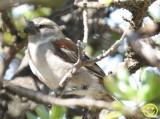 19 Sparrow Cape Town.jpg