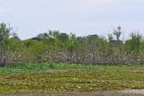 Heronry - Pintail Lake