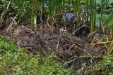 Alligator Nest
