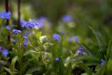 Tiny Blue World