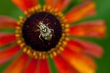 Lil' Bug