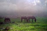 Grazing in the Fog