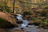 Moosalbe Stream