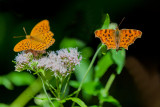 Comma and Friend
