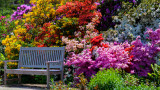 Rhododendron Bench