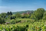 Wine Region Alsace