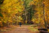 Sunny November Walk