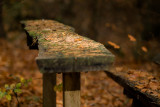 Tablecloths in the Forest