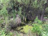 Sag pond