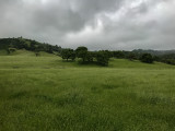 Meadows and rain clouds in the East Hills