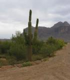 cactus on dirt road