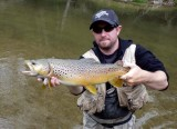 BrownTrout120.jpg