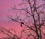 A squirrel at sunset...