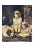 Clumber Spaniels by John Emms 1879
