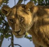 Tanzania - February, 2018