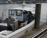 Lobester Boat Yellow Lab